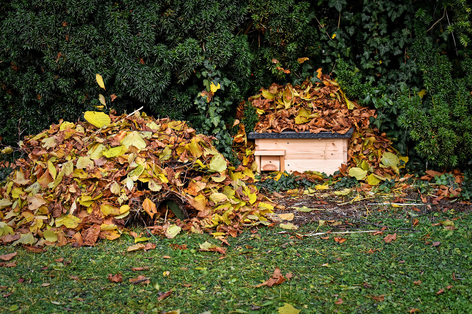 hedgehog house covered in leaves